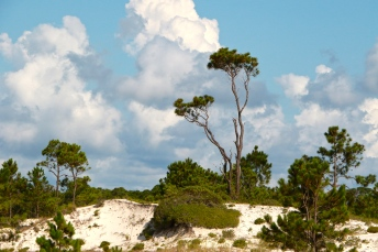 St George Island State Park