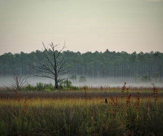Fog and bird in the morning