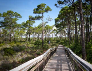 Explore the beauty of St George Island State Park