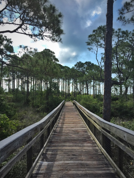 Nature surrounds at St George Island State Park