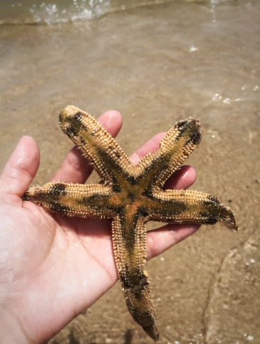 Almost stepped on this starfish on the beach at St George Island. Got a quick pic and let him go of course!